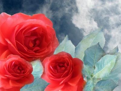 L'amour est  rouge