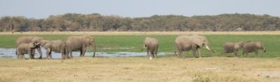 Elefantenherde im Amboseli-Nationalpark (Kenia)