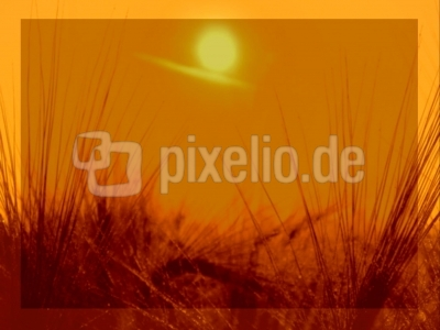 Morgensonne über Gerstenfeld