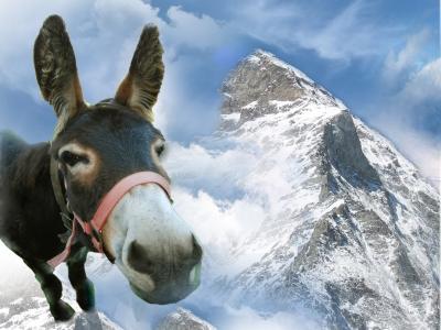 Der Esel am Berg