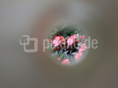 Blumen im Focus
