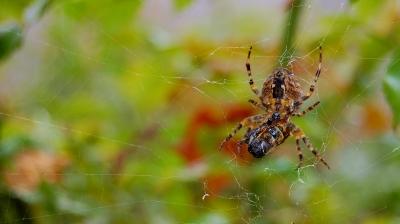 Spinnenstudie #5