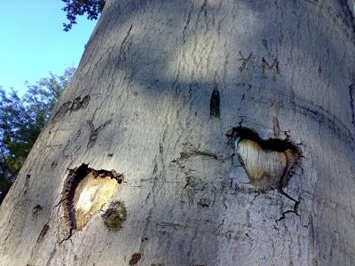 Herzen im Baum