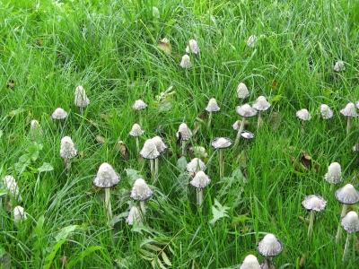 Pilze in ganzen Horden