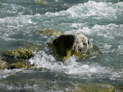 Lötschental - Wasser