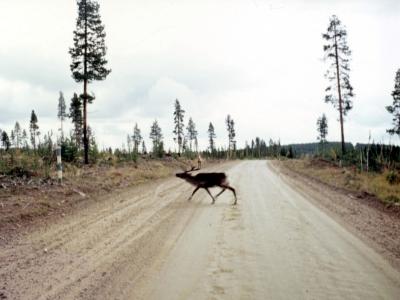 Tiere in Schweden