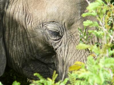 Mama von Dumbo