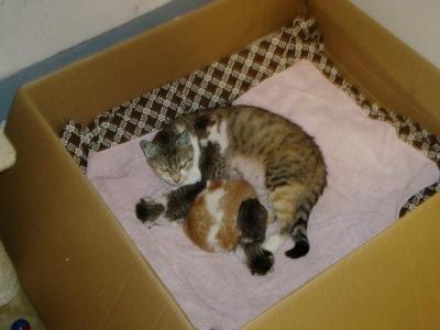 Katzenbabies mit Mama Leonie