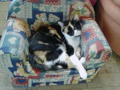 Katze Lucky auf Couch (Katzencouch)