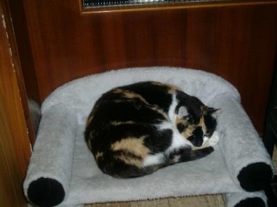 Katze Lucky auf Sofa (Katzensofa)