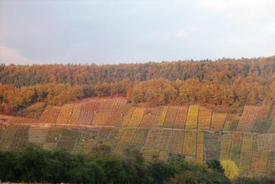 Herbst in der Klingenberger Weinbau - Steillage