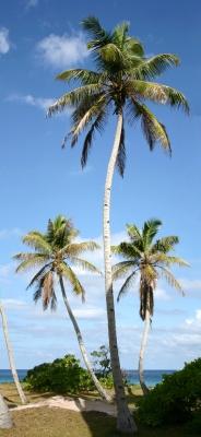 3 Palmen
