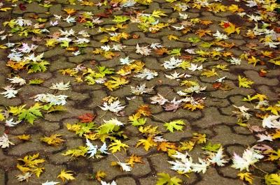 Herbstweg #3