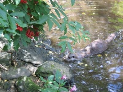 Otters Jagdrevier