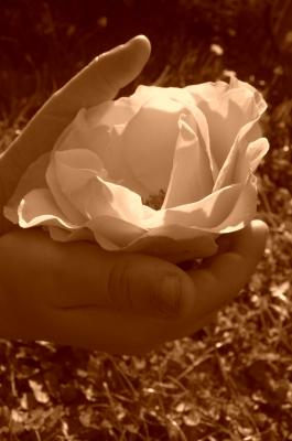 Blüte in Kinderhänden