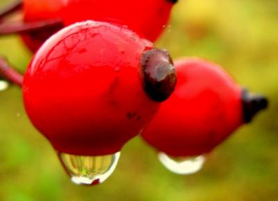 """Rote Perlen"""