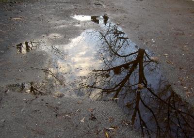 Ein Baum spiegelt sich in einer Pfütze