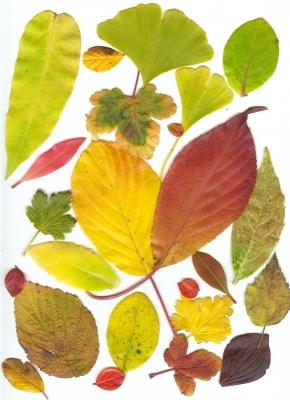 Blätter in unserem Garten 2
