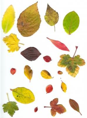 Blätter in unserem Garten 3