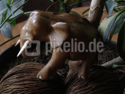 "Elefant im ""Wald"""