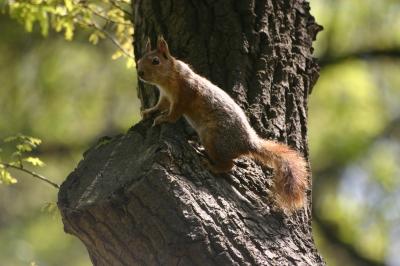 glückliches Eichhörnchen