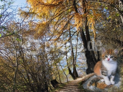 Maskottchen im Wald