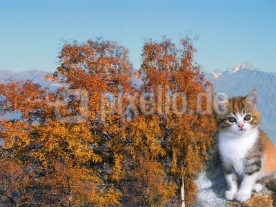 Eine echte Herbstkatze