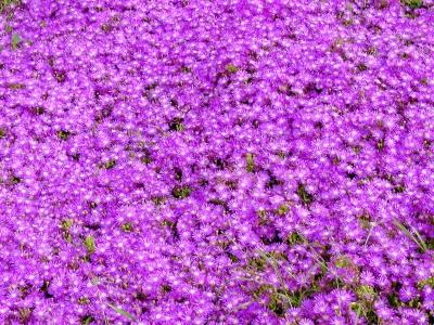Blüten 17