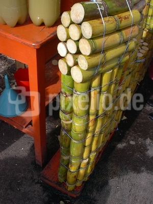 zuckerrohr aus ecuador
