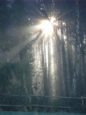 Wald im Morgennebel 3