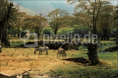 Im Ngorongorokrater