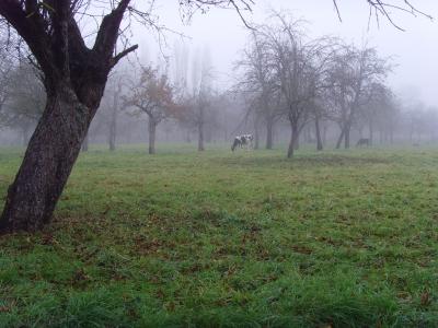 Herbst-Streuobstwiese