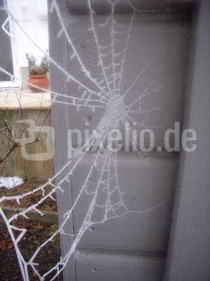 Spinnennetz das Zweite