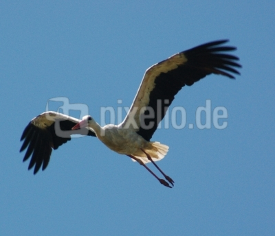 Storch 4