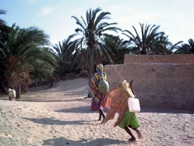 In der Oase Douz ( Tunesien )
