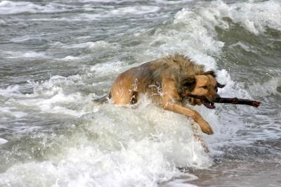 Wellensprung
