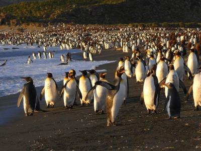 Pinguinland