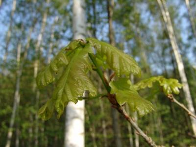 Frisches Grün 3