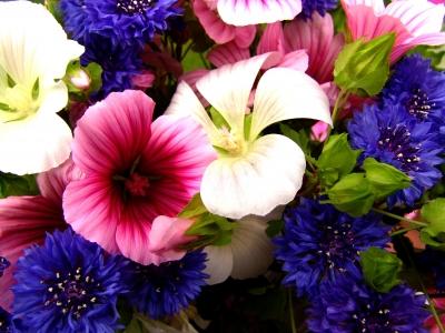 Ein bunter Blumenstrauß