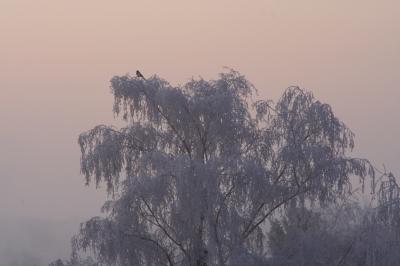 Frostiger Morgen - 1