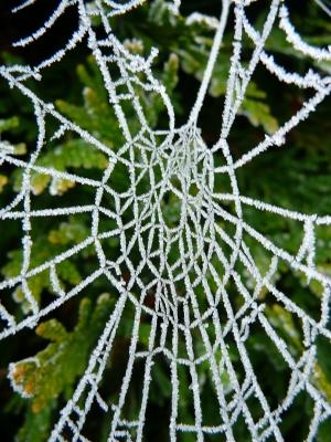 Spinnennetz vereist