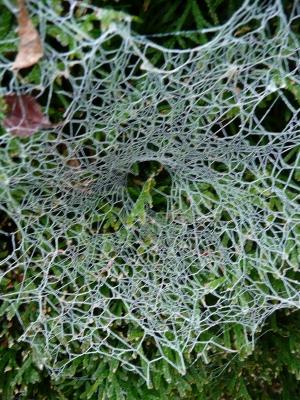 Trichternetz