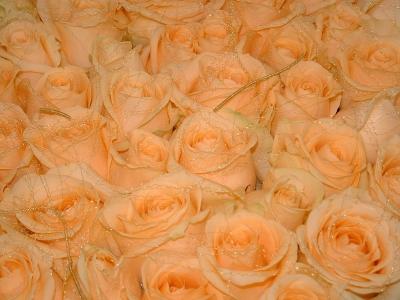 Rosenmeer der Liebe