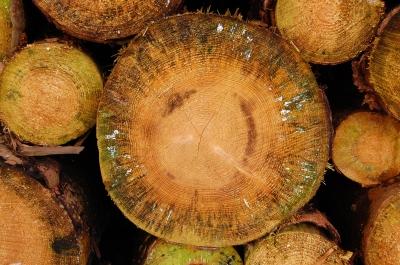 Holzschnitt-Textur