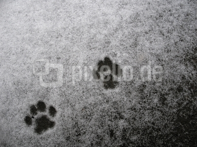 Katzenpfoten im Schnee