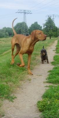 Hundebegegnung