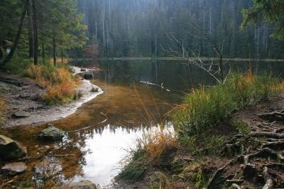 Bannwald_3