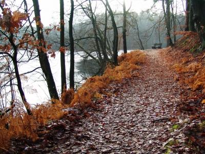Herbst am Wirchensee