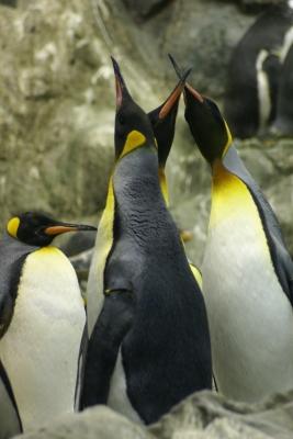 Pinguin-Palaver
