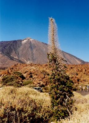 Im Teide-Krater